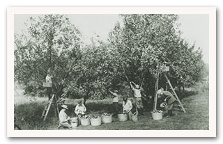 Apple Giving Tree Donation